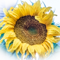 Why I Blog: Creativity And The Need To Give It Away